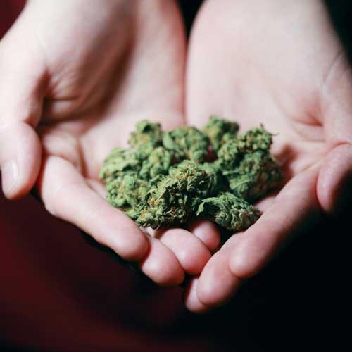 Dried Cannabis Flower
